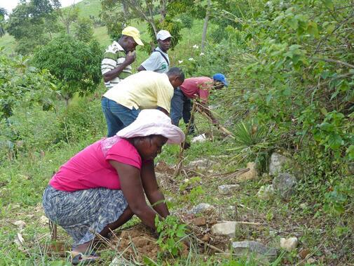 Gegen die Auswirkungen des Klimawandels in Haiti
